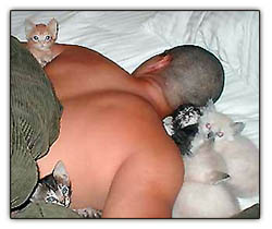 Man sleeping with kitty cats