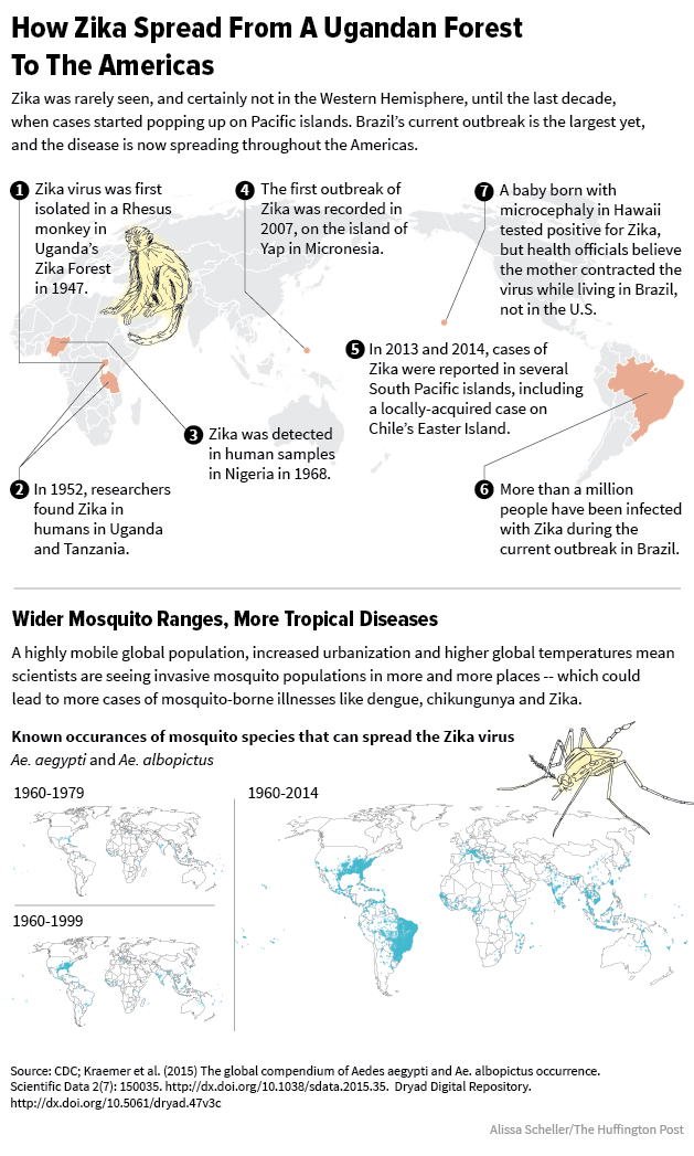 How Zika is spread